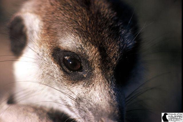 File:Flower Whiskers(VWF026) 2.jpg