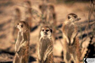 Members of Whiskers