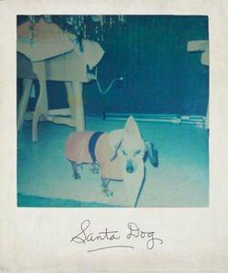 Santadog-originalpic