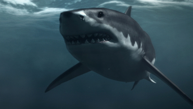 File:History Monsterquest Sn3 Evidence Mega Shark SF still 624x352.jpg
