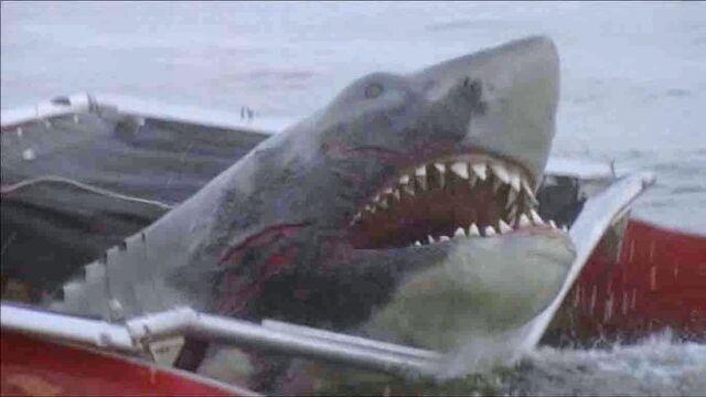 File:Jaws-2-shark.jpg