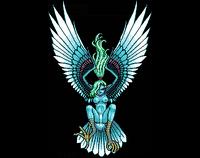 Aellopus