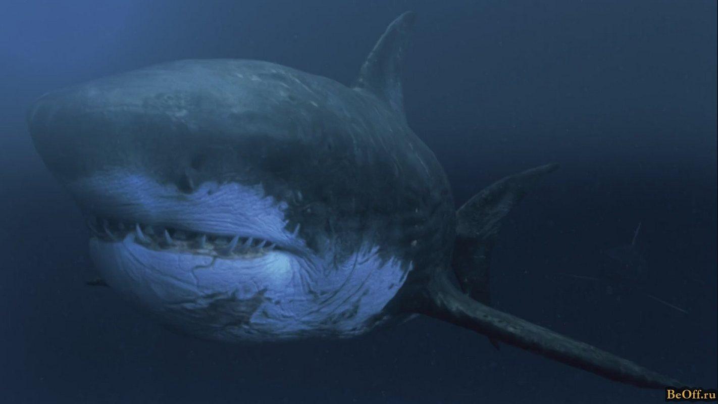 Mega Shark | Mega Shark Wiki | FANDOM powered by Wikia