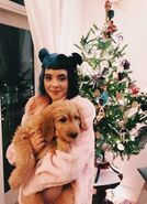 Dog-christmas-aesthetic-singer-Favim.com-4143110