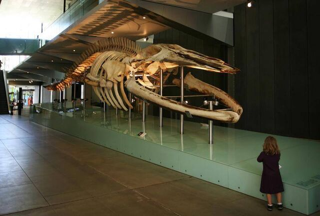 File:Melbourne-museum.jpg