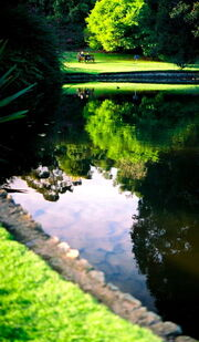349px-Nympheas Lake 2003-05-24