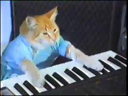 Kb cat01
