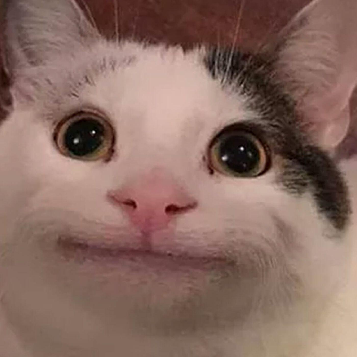 Polite Cat | Teh Meme Wiki | Fandom