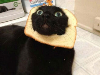 Breading-cats-Q016