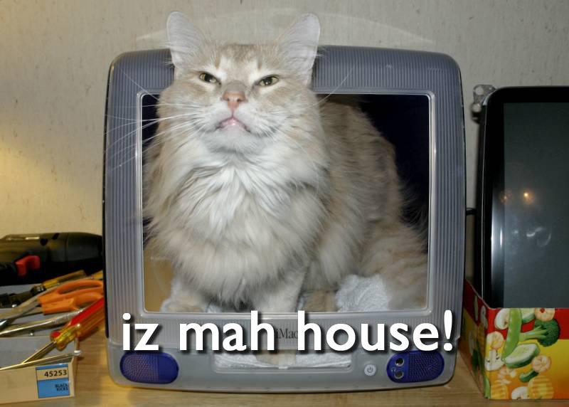 latest?cb=20081218101859 lolcats teh meme wiki fandom powered by wikia