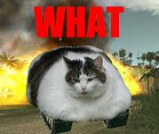 Tank-cat