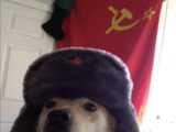 Perro Soviético
