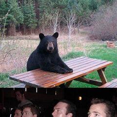 Versión osos