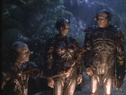 Borg-carne