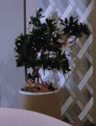 Enterprise-D plant 22, 2364