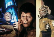 Genesis creatures