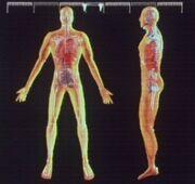 Marab's anatomy