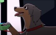 Dog, 2380