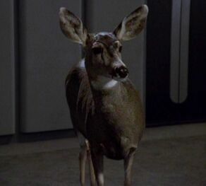 A deer from Chakotay's dreams