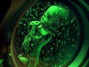 Borg reifungskammer