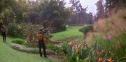 Betazed garden 2