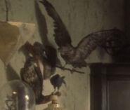 Akaali birds 1