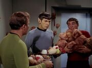 Scotty bringt Tribbles