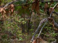 Forest (Equinox, Part II)