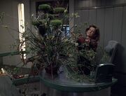 Janeway and a large plant