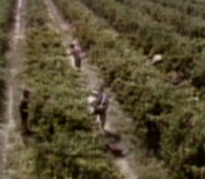 Vineyard workers 2