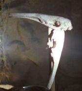 Terra Nova avian skull