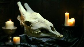 The skull of a Xindi-Avian (2154)
