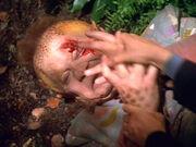 Neelix injured by a hawk