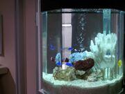 Aquarium in Trois Quartier