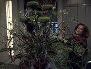 Greifende Rebenpflanze