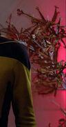 Enterprise-D plant 5, 2364