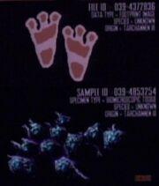 Tarchannen III species feet and cells