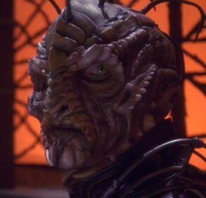 Reptilian councilor