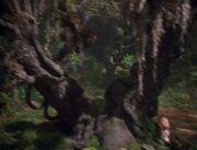 Guiding Tree naomi dream