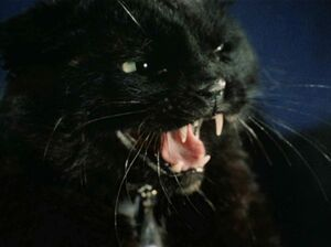 Sylvia as black cat