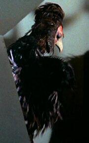 Humanoid bird