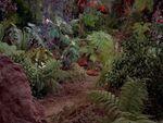 Pflanzen auf Eden