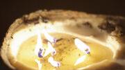 Candle on terra nova