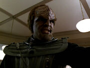 Worf in Eva's Kitchen
