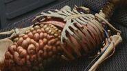 Vidiian internal organs