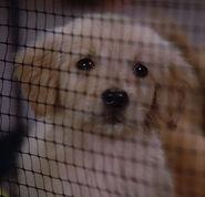 Puppy, 2365