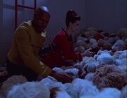 Tribble scan