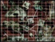 Salina Prime surface
