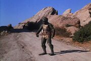 Gorn in the middle of a road