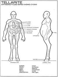 Tellarite anatomy - Star Fleet Medical Reference Manual